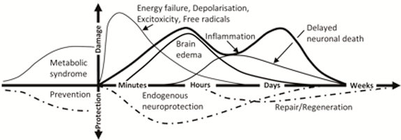 graph of chronology of stroke model